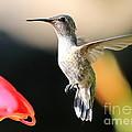 Hummingbird Happiness by Carol Groenen