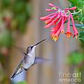 Hummingbird Happiness by Kerri Farley