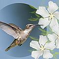 Hummingbird Heaven by Bonnie Barry