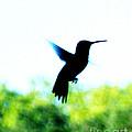 Hummingbird Hover by Lizi Beard-Ward