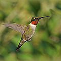 Hummingbird In Flight by Sandy Keeton