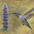Hummingbird In The Mint by Angie Vogel