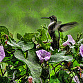 Hummingbird In The Rain by Shannon Story