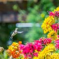 Hummingbird Moment by Alanna DPhoto