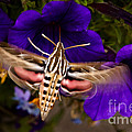 Hummingbird Moth   #8612 by J L Woody Wooden