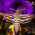 Hummingbird Moth   #8645 by J L Woody Wooden