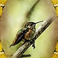 Hummingbird Noveau by Belinda Greb