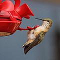 Hummingbird On Feeder by Alan Hutchins