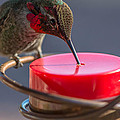 Hummingbird On Feeder by Michael Moriarty