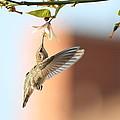 Hummingbird by Oscar Jones