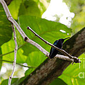 Hummingbird Out On A Limb by Laurel Best