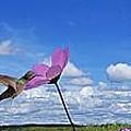 Hummingbird Panorama by John  Kolenberg