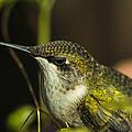 Hummingbird by Philip Rispin