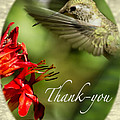 Hummingbird Thanks by Belinda Greb