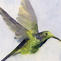 Hummingbird Watercolor Bird Painting by Beverly Brown