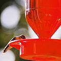 Hummingbird With Globes by Cynthia Syracuse