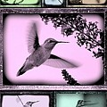 Hummingbirds In Old Frames Collage by Carol Groenen
