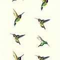 Hummingbirds by Michael Vigliotti