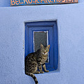 Humorous Cat Sign by Jean-Louis Klein and Marie-Luce Hubert