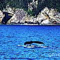 Humpback Whale Alaska by Thomas R Fletcher
