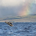 Humpback Whale And Rainbow by M Swiet Productions