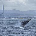 Humpback Whale Breaching By Shane Keena  by California Coastal Commission