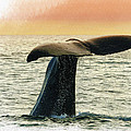 Humpback Whale by Don Kuing