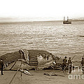 Humpback Whale On A Monterey Beach California  Circa 1896. by California Views Archives Mr Pat Hathaway Archives