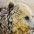 Hungry Bear by Sotiris Filippou