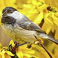 Hungry Bird by Bill Wakeley