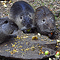 Hungry Critters by Sally Weigand