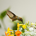 Hungry Flowerbird by Heiko Koehrer-Wagner