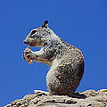 Hungry Ground Squirrel by Richard Cheski