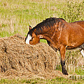 Hungry Horse by Liz Leyden