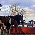 Hungry Horses by Joseph Skompski