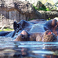 Hungry Hungry Hippo by Diana Child