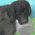 Hungry Newfoundland Dog Canine Animal Pets Art by Cathy Peek