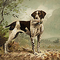 Hunting Dog Circa 1879 by Aged Pixel