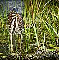 Hunting Heron by Cheryl Baxter