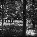 Hunting... by Rhonda Barrett