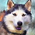 Huskies by Yury Malkov