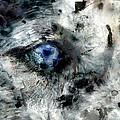 Husky blue Eyes