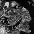 Husky by Lauren Alexandra