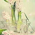 Hyacinth Arrangement by Amanda Elwell