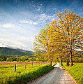 Hyatt Lane Cade's Cove Great Smoky Mountains National Park by Dave Allen