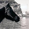 Hydra Horse by Alexandros Daskalakis
