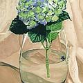 Hydrangea Blossom by Barbara Jewell