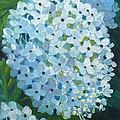 Hydrangea Blossom by Janet Zeh
