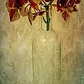 Hydrangea by Elena Nosyreva