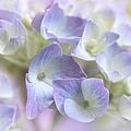 Hydrangea Floral Macro by Jennie Marie Schell
